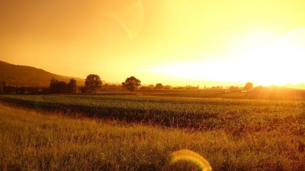 Paisaje de un campo al atardecer. Subvención transformación digital en Castilla la mancha