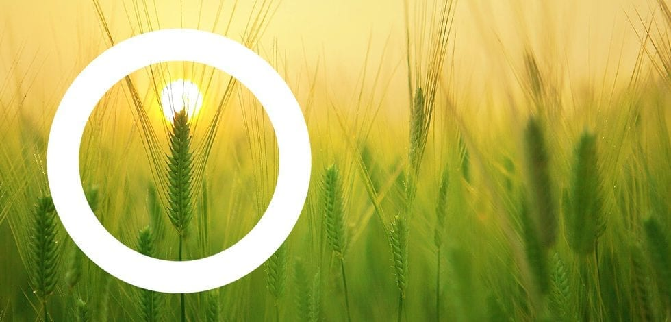 Webinar Next Generation EU Cadena Logística del Sistema Agroalimentario y Pesquero